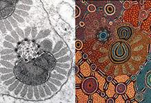 Moth paraspern by Greg Rouse and Witchetty Grub Dreaming by Jennifer Napaljarri Lewis, Warlukurlangu Artists of Yuendumu